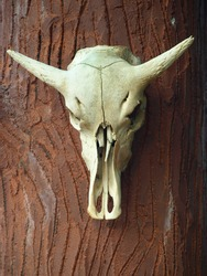 a skull of a cow hanging on the wall with blurred background