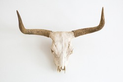 a skull of a cow with horns against a white wall