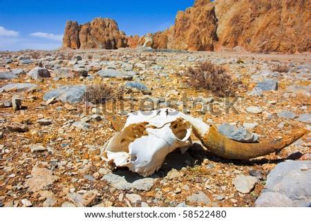 a skull on a desert