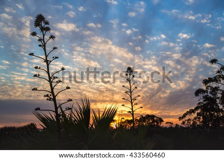 Shutterstock A sky dappled by clouds and a beautiful sunset with yuccas, and aloe vera plants silhouetted in the foreground. Ayamonte, Andalusia, Spain
