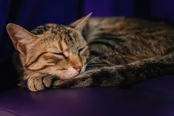 A sleeping cat on an ottoman in the twilight.