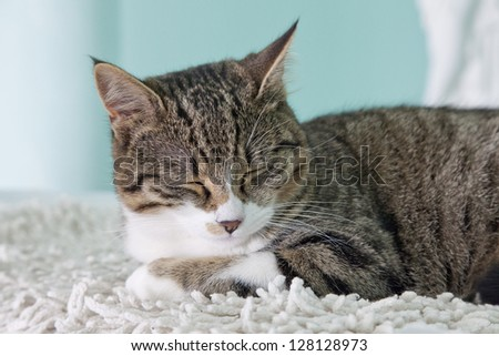 A sleeping cat over a white carpet