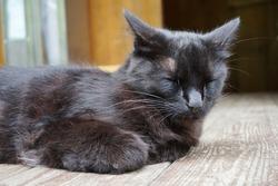 A sleepy black cat on the floor