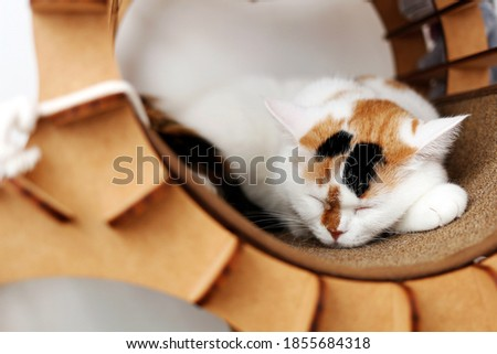 a sleepy cat with a pattern on its face Foto stock ©