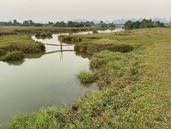 A slim bamboo bridge crossing a small canal in Nho Quan, Ninh Binh, Vietnam