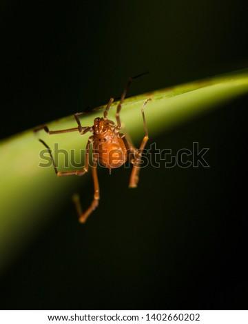 A small arachnid under a green leaf #1402660202