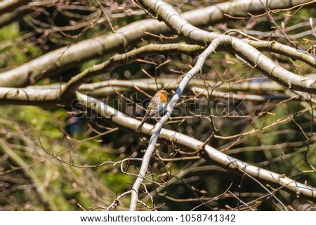A small bird in the woods #1058741342