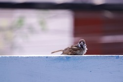 A small bird is on the wall.