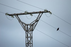 A small bird standing on an electric wire