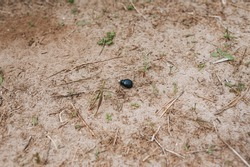 A small black bug creeps on the ground. Lone insect.