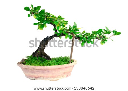 A small bonsai tree - stock photo