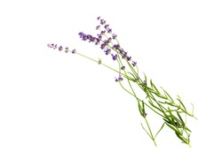 A small bouquet of lavender sprigs on a white background