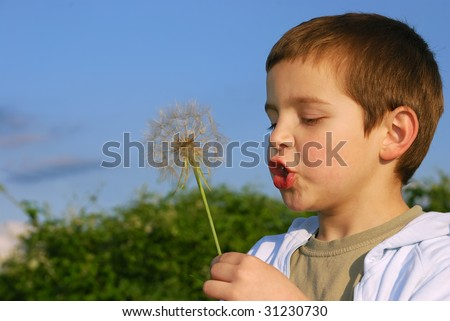 A small boy with big dreams, lit with afternoon sun holding big dandelion-like plant in hand and blowing.