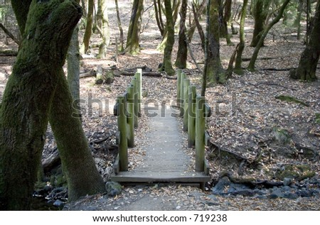 A small bridge lets hikers cross a small stream in a wooded area.
