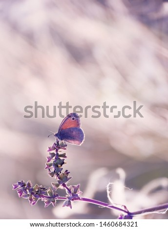 A small butterfly doves on tender stems on a spring, summer meadow. Soft soft photo, soft focus. Beautiful sunlight.