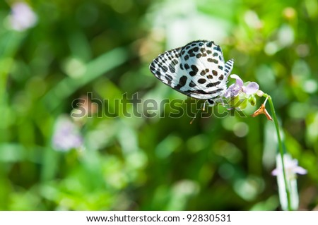 A small butterfly on a leaf