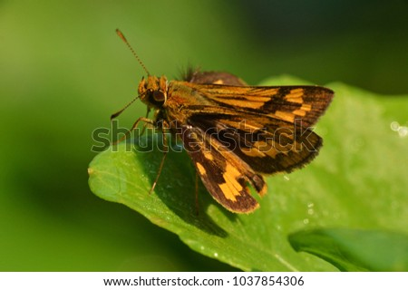 a small butterfly on the leaf