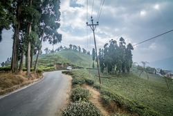 A small car on road winding through rolling hills of tea plantation fields in Darjeeling, India