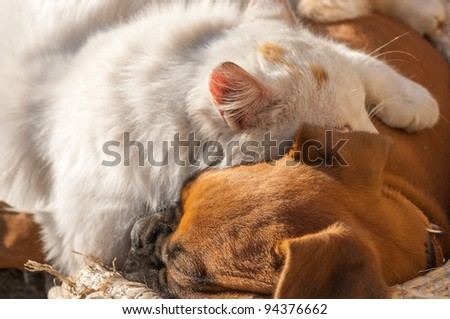 A small cat and a small dog sleeping together as good friends