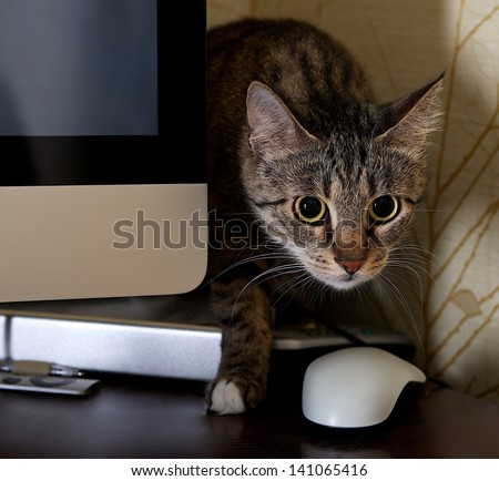 A small cat in a home office - peeping behind a computer screen, domestic cat in natural background, small cat playing at home, young cat,playing cat, interior with cat, cat and computer, curious cat
