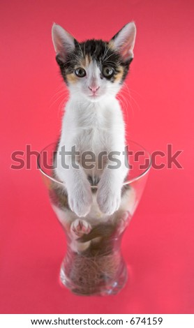 A small cat inside a vase over a pink background.