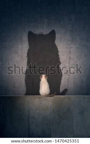 A small cat with a big cat shadow #1470425351