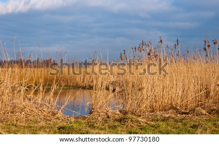 A small creek with yellow reeds in the Dutch National Park De Biesbosch. The winter season is nearly over and springtime is coming.
