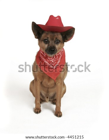 a small dog in a cowboy outfit