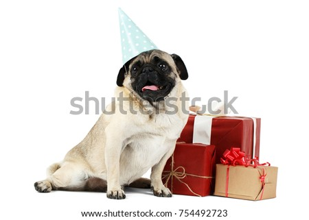 A Small Dog With Flat Snout And Blue Cap On His Head Sits Near