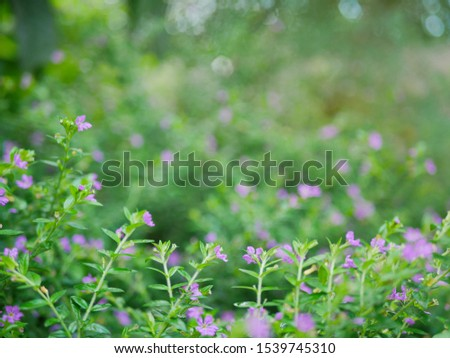 A small evergreen shrub background - Cuphea Hyssopifolia, the false heather, Mexican heather, Hawaiian heather, or elfin herb #1539745310