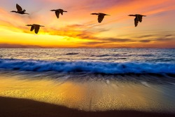 A Small Flock of Birds Flying Over the Ocean Waves at Sunset