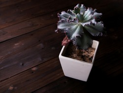 A small flower in a small pot kept on a brown table to bring a relaxed feeling.