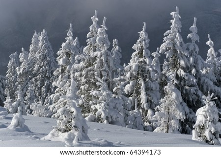 a small forest of trees with snow