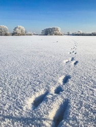 A small forest under the sky and foot step on the white shiny snow. animal tracks. A bush of trees cast big shadow on the snowy ground with light from the sun shining onto the earth. Beautiful nature