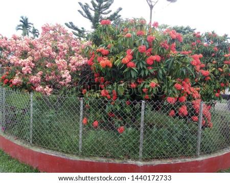 A small garden of flowers