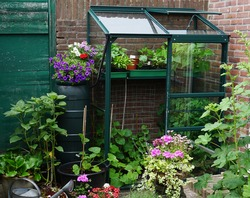 A small garden with little greenhouse in the city. Growing own flowers and plants and vegetables. Urban small botanical english garden on a little area.