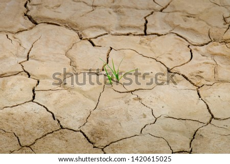 A small grass on the drought land. the land is broken #1420615025