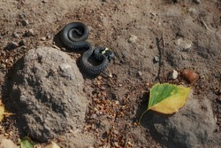 A small grass snake is wriggling on the ground and crawling to a leaf. Autumn time. Top view.