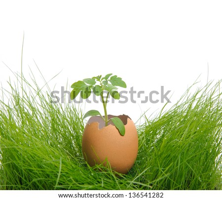 A small  green plant in the  cracked eggshell on the grass