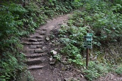 a small hiking trail in the forest