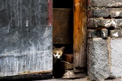 A small kitten hidden behind the wall