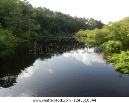 a small lake in the Landes forest #1245518344