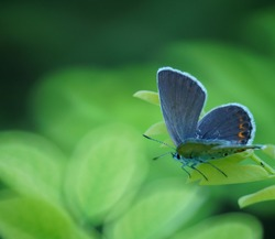 A small lilac butterfly on a green leaf. Insects in nature. Close up.