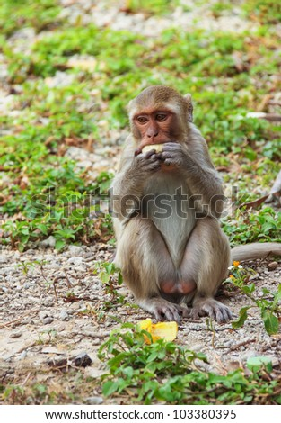 A small monkey sitting and eating