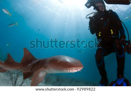 A small nurse shark swimming over the white sands of the Bahamas