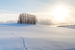 A small pine forest under the sunset and foot steps on the white shinny snow. A bush of trees cast big shadow on the snowy ground with light from the sun shining onto the earth. Beautiful nature