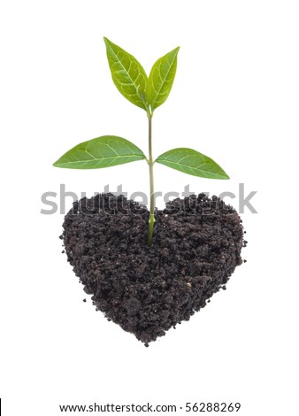 A small plant growing out of a heart shaped soil. Symbolizes care for life and the ecosystem for a sustainable future.