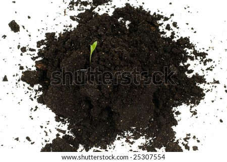 A small plant growing out of some topsoil, isolated against a white background