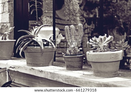 A small plant pot at edge the window ,in cafe #661279318