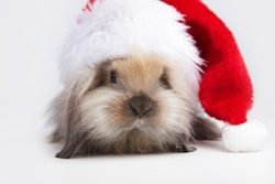 A small rabbit in the hat of Santa Claus